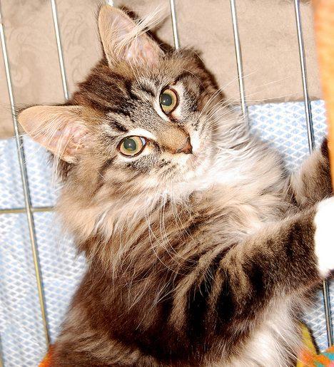 Lua The Brave & Beautiful Kitten – Part 2 – Lua's Progress