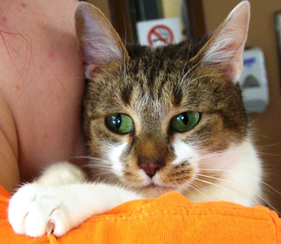Seized Cats Looking For Homes After Being Held 2 Years At