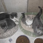 Rescued Kitty Family Now Enjoying Holiday with Full Bellies