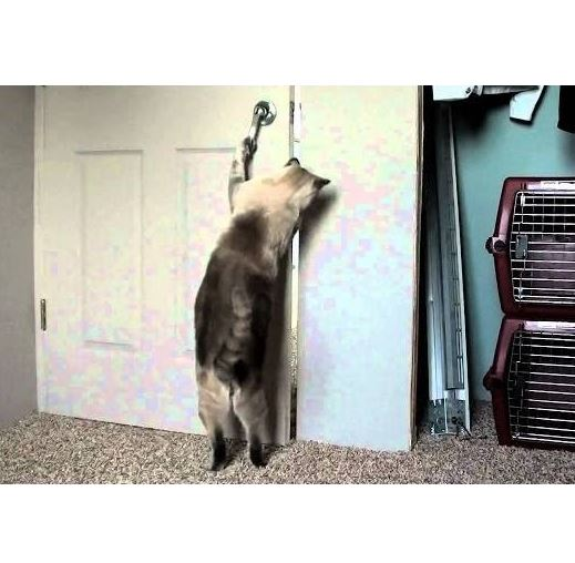 Funny Cats Opening Doors Compilation 2013