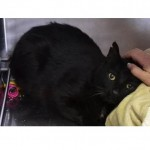 Abandoned Cat George Bailey Begins to Show Love and Heal