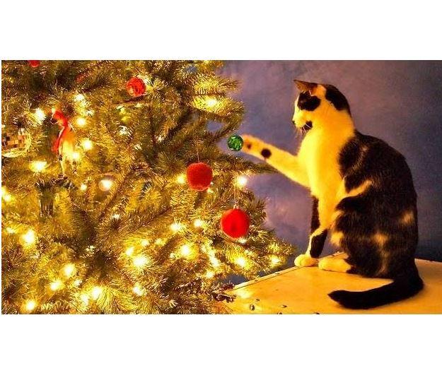 A ShoKo Christmas