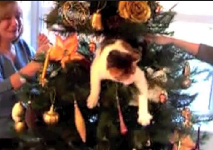 Naughty Cat Christmas