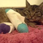 Buddy Holly, Old Injured Cat Gets Help