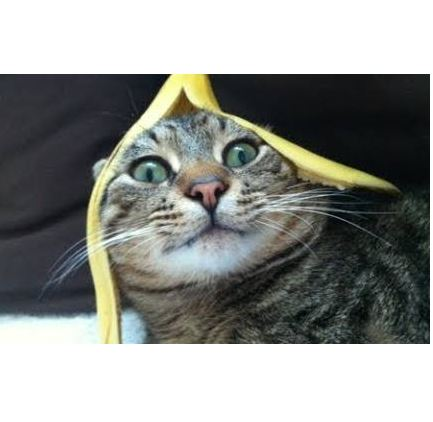 Funny Cats Reacting to Bananas Compilation 2013