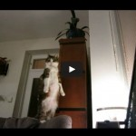 Cat Vertical Stretch Compilation