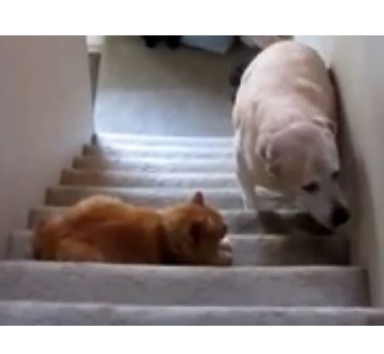 Funny Dogs Scared of Cats Compilation 2013
