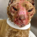 Russell: Cat Burned in House Fire Gets Help