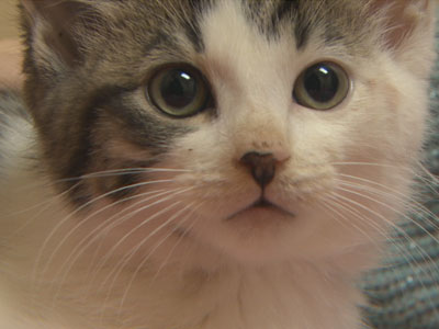 Kitten is Doing Well After Being Thrown from Car