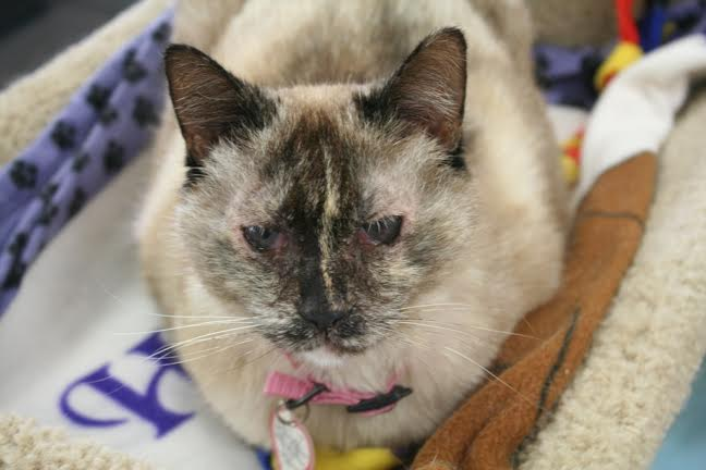 Nearly Blind Cat Rescued Alongside Dedicated Feline Partner