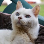 Cat Overcomes Adoption Challenges and Steals Hearts