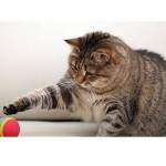 Funny Cats Playing Fetch Compilation