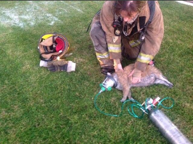 Phoenix Firefighters Rescue Woman's 6 Cats and Dogs from Condo Fire