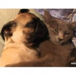 Dog Snores In Cat's Arms AWW