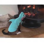 Cold Kitty: #SharkCat and Fireplace