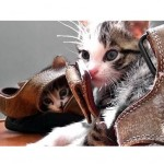 The Kittens & The Sandals – A Love Story
