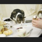 Exclusive: Inside London's first cat cafe