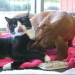 Ruth and Idgie: Abandoned Bonded Special Needs Kitten and Dashshund to Stay Together