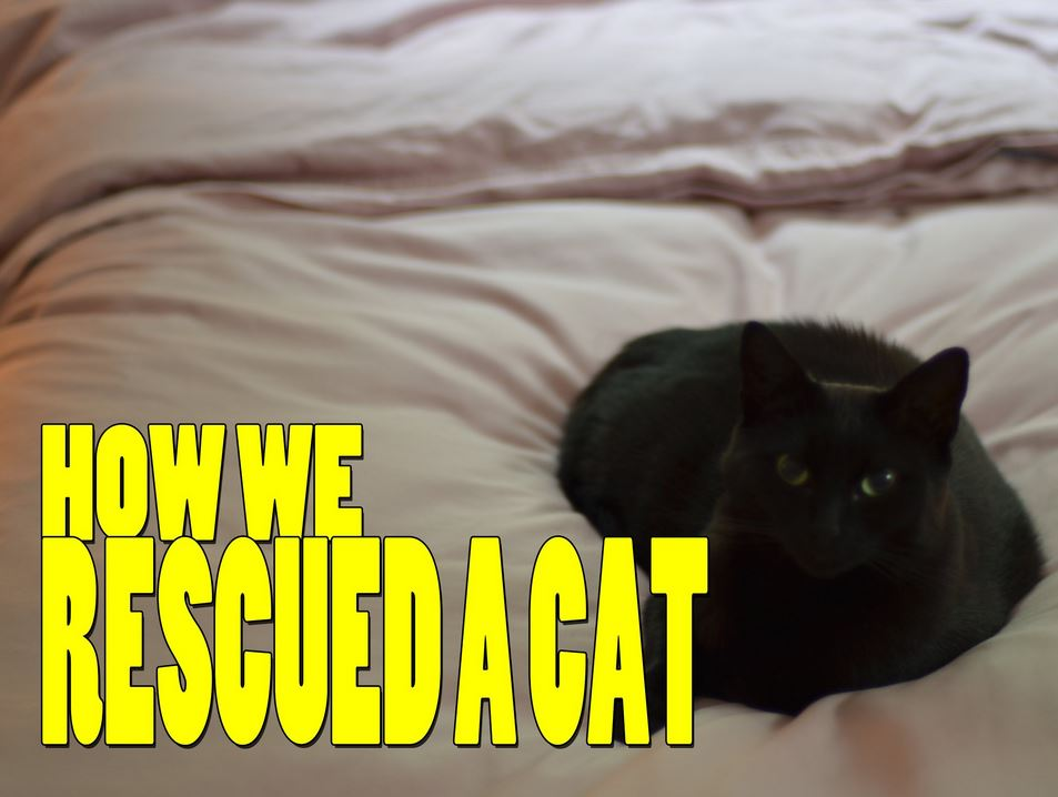 How We Rescued a Cat
