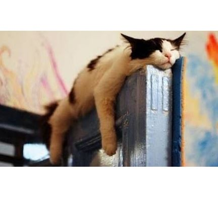 funny cats sleeping in weird positions compilation  life