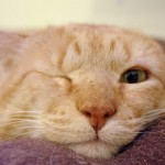 Rescued Kitty Finds Forever Love Despite Numerous Challenges