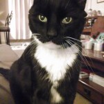 Cat Wins Hearts and is Rescued from Euthanasia Just in Time