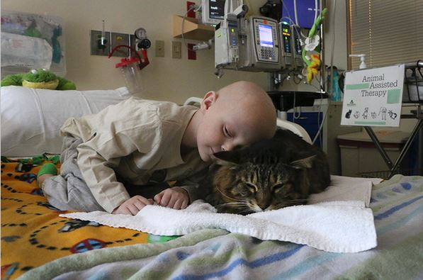 Cat Comforts Patients At Children S Hospital Life With Cats