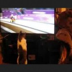 Cat Watches Luge