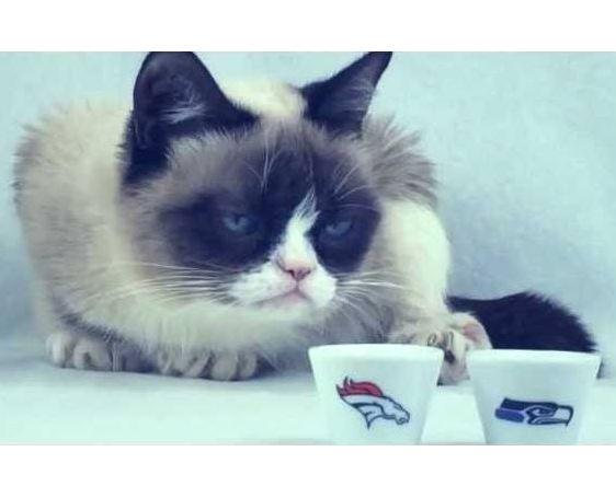 Grumpy Cat and Pokey Predict The Super Bowl!