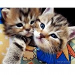 Happy Valentine's Day! Cutest Kittens and Cats Couples