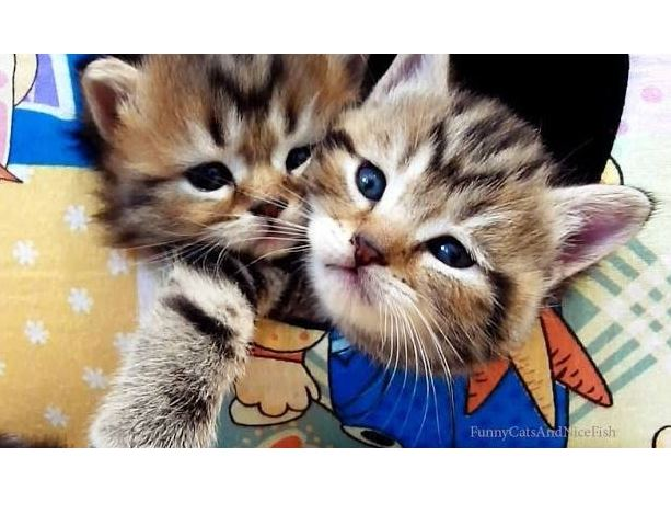Happy Valentine S Day Cutest Kittens And Cats Couples Life With Cats