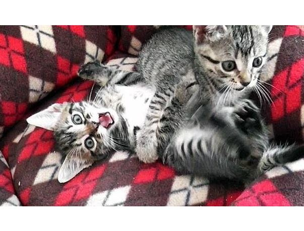 Cute Fighting Kitten Suffers From Face Freeze