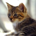 Treating Cats with E. coli