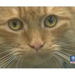 WVC Animal Shelter Achieves No kill status