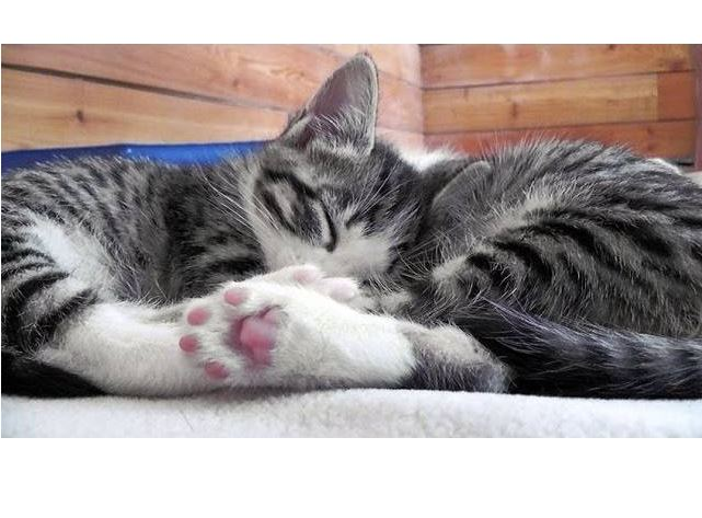 Beautiful Peaceful Kittens