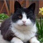 A Tribute To Luvly, A Very Special Cat