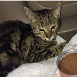 Concerned Animal Lovers Use Social Media to Rescue Kitten from Busy Highway