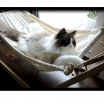 Timo and His Hammock, Part II