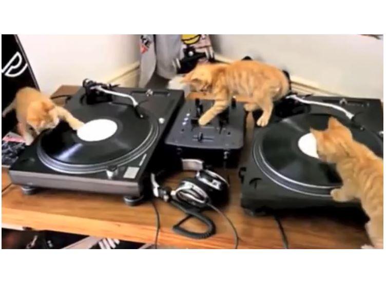 Kitten Beats