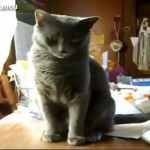 Cats Knocking Things Over Compilation