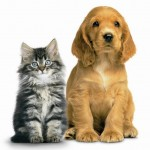 PAWS Animal Welfare Bill Public Hearing Held Today