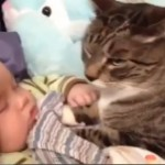 Cats And Dogs Protecting Babies Compilation