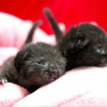Newborn Kittens Accidentally Shipped in Box Get TLC at Shelter