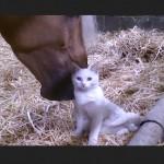 Horse Nuzzles Cat