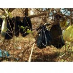 Reward Offered in Case of Dead Cats Found Hanging in Bags from Trees