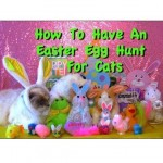 How to Have An Easter Egg Hunt For Cats
