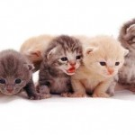 5 TIPS TO HELP KITTENS THIS SPRING