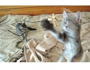 jump kittens jump