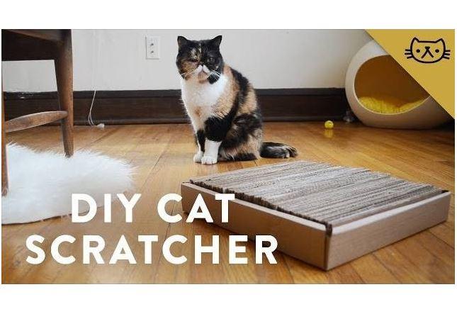 DIY Cardboard Cat Scratcher with Pudge the Cat
