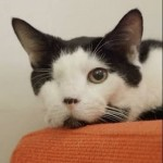 Nelson & Merrill: One Eyed Cat Finds the Perfect Home